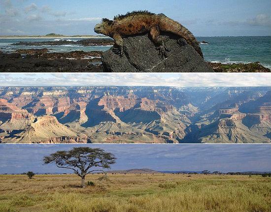 Parques Nacionais são áreas de preservação ambiental que pertencem a um Estado. Mais do que isso, conhecê-los é uma ótima maneira para você aprender mais sobre a natureza, fazer ecoturismo e conhecer mais da biodiversidade de um país ou região. Existem diversos parques nacionais interessantes mundo afora, conheça alguns deles nessa seleção da SUPER.