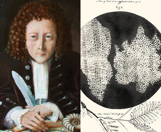 CÉLULA (1665) - As células foram descobertas e nomeadas pelo cientista inglês Robert Hooke, que dedicou-se à observação microscópica.