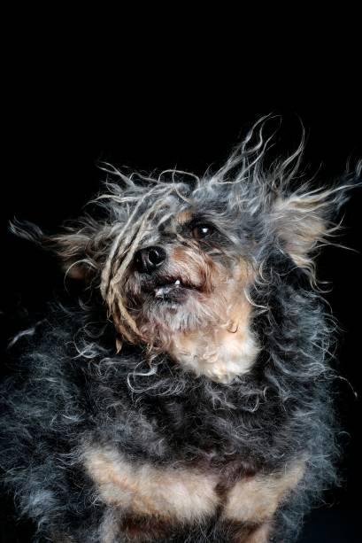 Scamp estava pronto para tomar a injeção de eutanásia, mas abanou o rabinho para alguém dentro do laboratório. Essa pessoa o adotoue fez com que ele fosse um cão de terapia. Elevisitaorfanatos e asilos.Já é a segunda vez que ele concorre ao prêmio de cão mais feio do mundo.