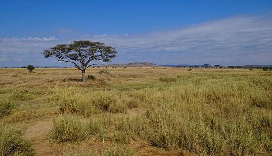 As migrações de gnus, zebras e gazelas tornam o Parque Nacional de Serengeti um destino obrigatório de quem passa pela Tanzânia.