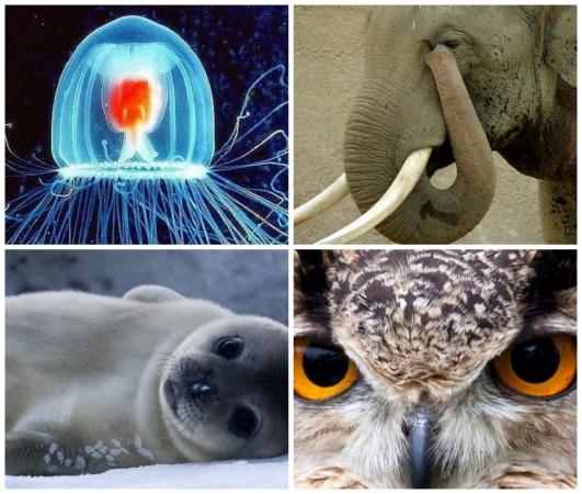 Eles têm poderes que muitos super-heróis invejariam. Veja 10 animais que são capazes de fazer coisas incríveis.
