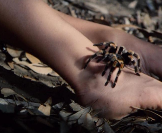 Tarântulas (1977), dirigido por Stuart Hagmann, conta a história de um carregamento de café infestado por aranhas. O avião que leva a mercadoria sofre um acidente no ar, e os grãos (e as aranhas) são lançados sobre uma cidadezinha dos EUA. Lá os animais promovem uma verdadeira matança.