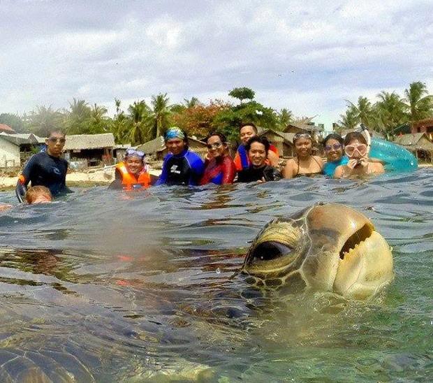 Em abril, uma tartaruga apareceu desurpresa em uma fotografia, quando umgrupo registrava um momento na água naIlha de Apo, nas Filipinas.A imagem curiosafoi feita por Diovani de Jesus e virou hit na web ao ser compartilhada nas redes sociais.