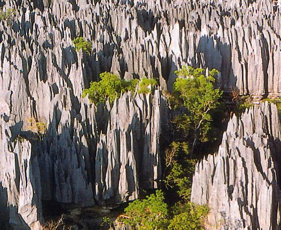 Esta não é uma continuação da floresta de pedra chinesa. Na verdade, é uma reserva ambiental específica do oeste da ilha de Madagascar! Lá podem ser encontradas espécies raras de lêmures e pássaros. A área conhecida como 'Tsigy de Bemaraha' tem 1500 km². Os picos chegam até 100 metros de altura.
