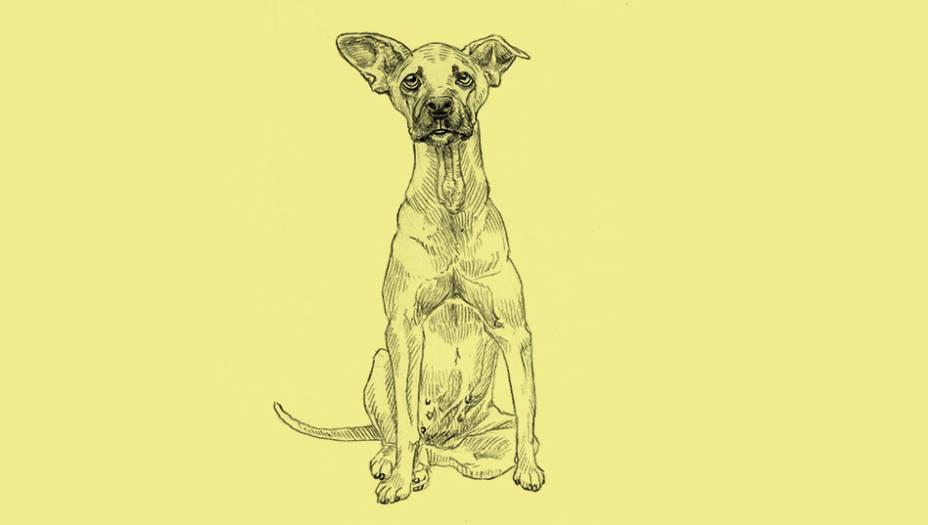 """Diferentes dos cães de raça pura, que tiveram suas características moldadas artificialmente pelo homem ao longo dos séculos, os cães sem raça definida (SRD) são o resultado do, digamos, amor-livre entre cães de quaisquer raças. Enquanto os cães de raça definida costumam ficar doentes com frequência, os mestiços esbanjam saúde. O que eles têm de especial é justamente a miscigenação, já que não passam por processos comuns em canis para """"purificar"""" as raças. É normal que certos criadores cruzem cachorros da mesma família para fortalecer os traços de uma raça definida ou para obter uma nova. O resultado disso, além de exemplares superfofos e pomposos, são problemas de saúde congênitos. Cruzar cães da mesma família não é exatamente uma boa ideia do ponto de vista genético. Por esses motivos, estima-se que mais de dois terços dos retrievers do mundo inteiro vão sofrer com algum tipo de câncer durante a vida. A ineficácia do sistema respiratório dos cães de focinho achatado vem daí também. Toda raça tem seu calcanhar de aquiles no que se refere à saúde. Você tem um lulu da pomerânia? Saiba que as chances de ver seu mascote sofrer com luxação patelar, colapso de traqueia ou os dois, simultaneamente, é imensa. Os vira- latas escaparam dessas ciladas genéticas. Isso sem falar na malandragem adquirida nas ruas. Um bom exemplo disso se chama Gordão. Já pode ter acontecido com você: um vira-lata simpático aparece no seu quintal, por acaso, em dia de churrasco... veja só que oportuno! A turma, animada, oferece um pãozinho, uma carninha, e ele vai ficando por ali mesmo. Foi o que aconteceu em casa há 15 anos. Antes de ganhar o nome de Gordão, nosso SRD era pele e osso com sarnas. Não tinha mais do que 1 ano e não precisou de mais do que duas semanas para ficar rechonchudo, com pelagem brilhante e um eterno olhar de gratidão irresistível. A inteligência dele era impressionante: conforme ganhava massa muscular, aprendia a escalar os muros da casa para dar suas voltinhas noturnas e p"""