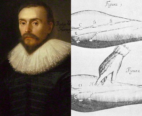 FUNCIONAMENTO DO CORAÇÃO (1628) - O sistema circulatório foi descrito corretamente pela primeira vez pelo médico britânico William Harvey. O funcionamento do coração foi explicado em detalhes na obra De Motu Cordis.