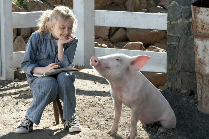 Os porcos também têm personalidade – e ela tem pontos em comum com a humana