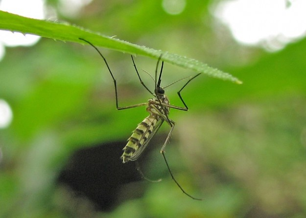adesivo-mosquitos-super