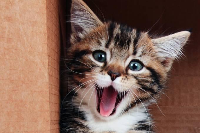as-habilidades-escondidas-da-lingua-do-gato