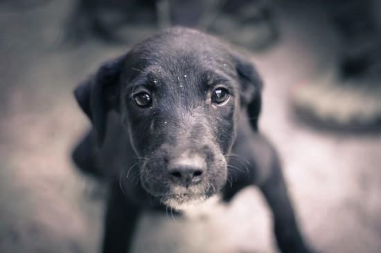 dog-245352_640 (1)