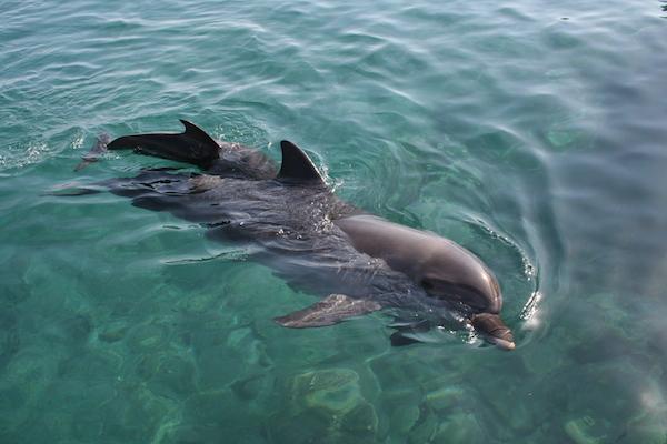 Eilat_-_Dolphin_reef