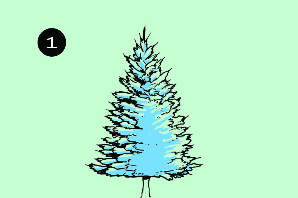 Como montar a árvore de Natal perfeita: Escolha a árvore