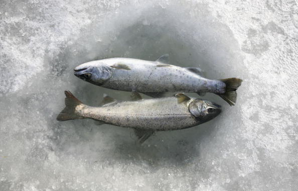 South Korean Anglers Compete In The Ice Festival's Mountain Trout Competition