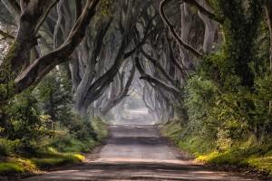 Dark Hedges, famosa paisagem da Irlanda do Norte usada em Game of Thrones. foto: AndySG | iStock