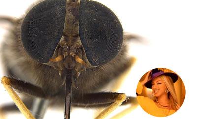 mosca-homenagem-beyonce