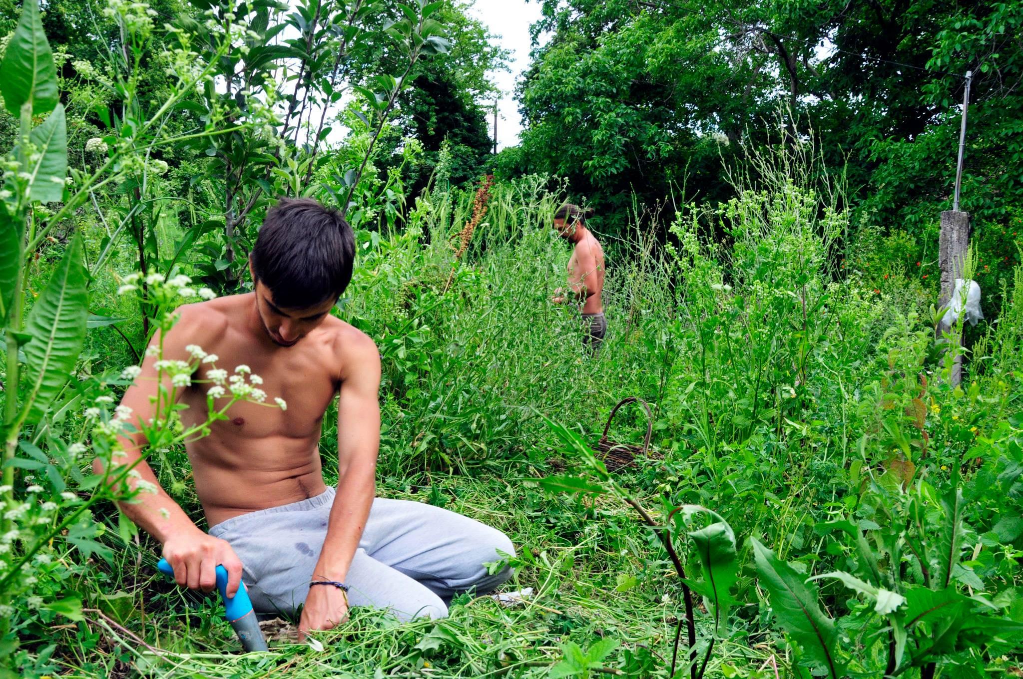 resposta-crise-jovens-fundam-comunidade-sustentavel-grecia5