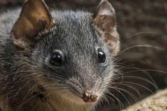 size_810_16_9_aa-marsupial2