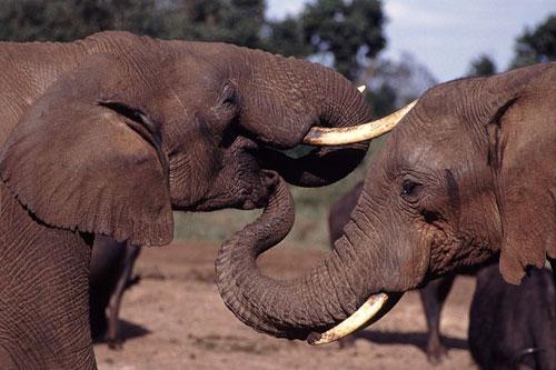 tromba-elefante-arroba