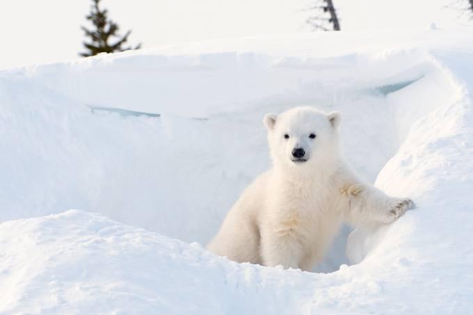 ARQUIIVO | 20 curiosidades incríveis sobre o mundo animal
