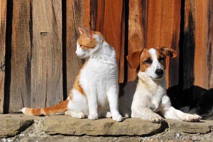 Cachorro é mais inteligente que gato? O veredito da ciência