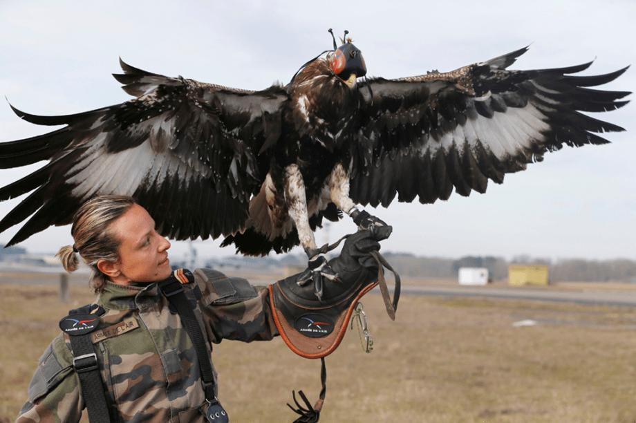 Com garras fortes, as águias são ideais para derrubar aviões de pequeno porte não tripulados
