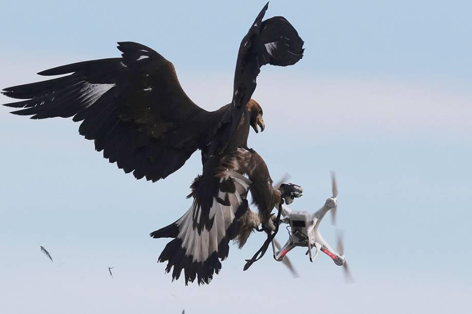 Aves de rapina já demonstraram hostilidade natural aos objetos eletrônicos