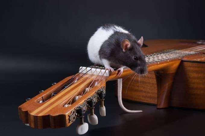 SUPERNOVAS | Terapia genética recupera audição de ratinhos surdos