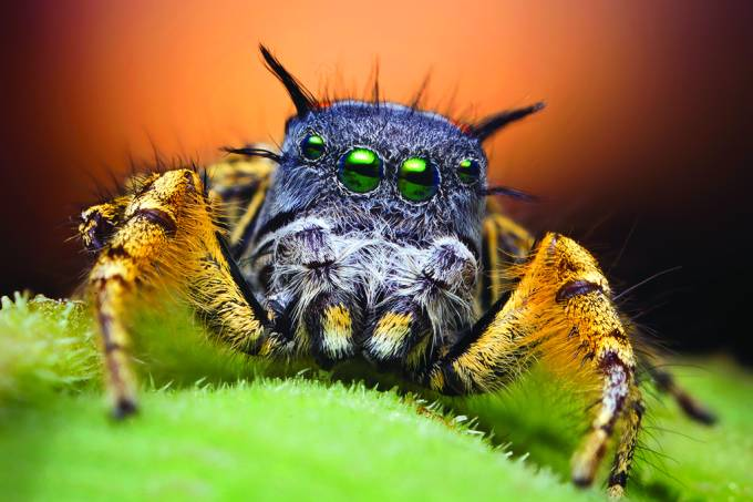 Aranhas consomem até 800 milhões de toneladas de caça por ano