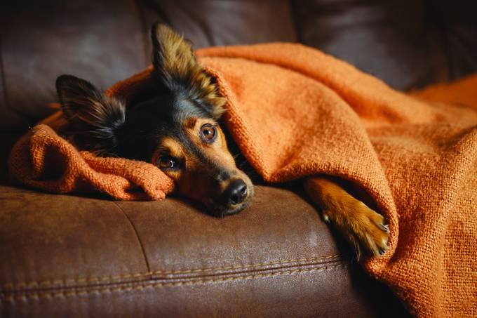 É verdade que cachorros sofrem no fim de um relacionamento?