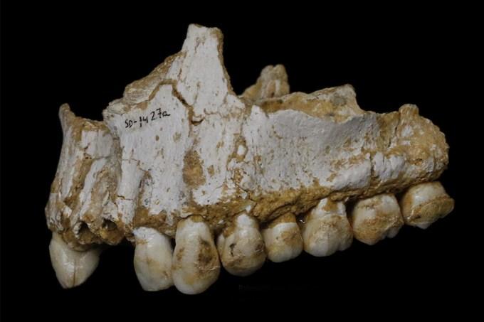 Neandertais tomavam aspirina