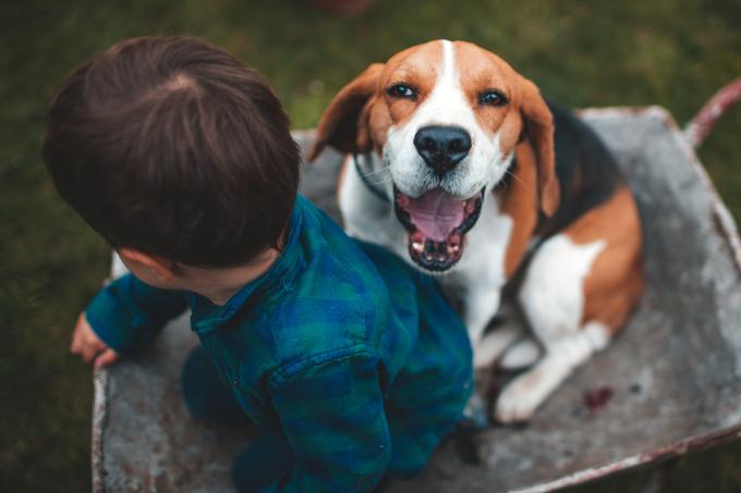Animais de estimação reduzem alergias e obesidade