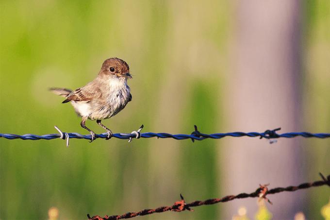 Pássaros cantam menos em resposta a barulhos de trânsito