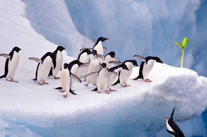 A Antártica está começando a ser tomada por vegetação – e isso não é bom