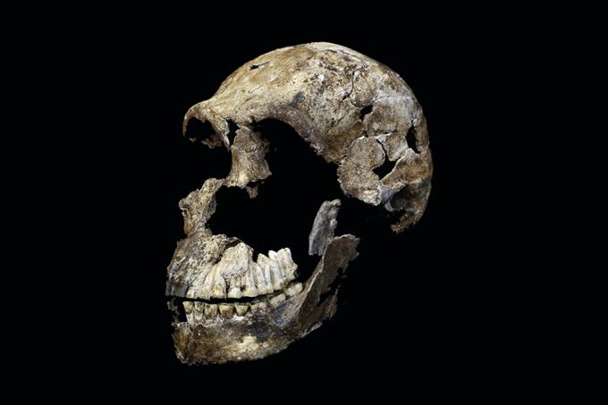 Um esqueleto quase completo do mais novo hominídeo