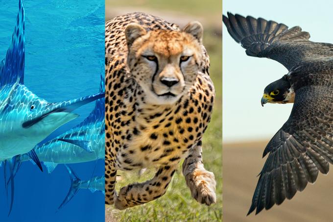 Por que alguns animais são tão rápidos? Esta fórmula explica