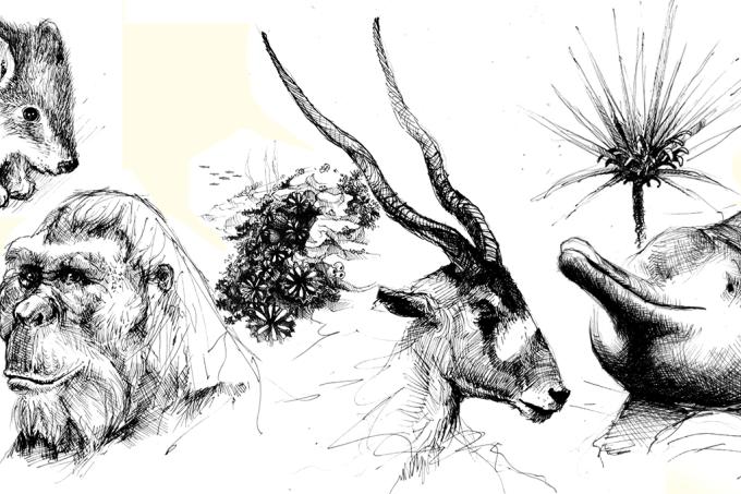 espécies
