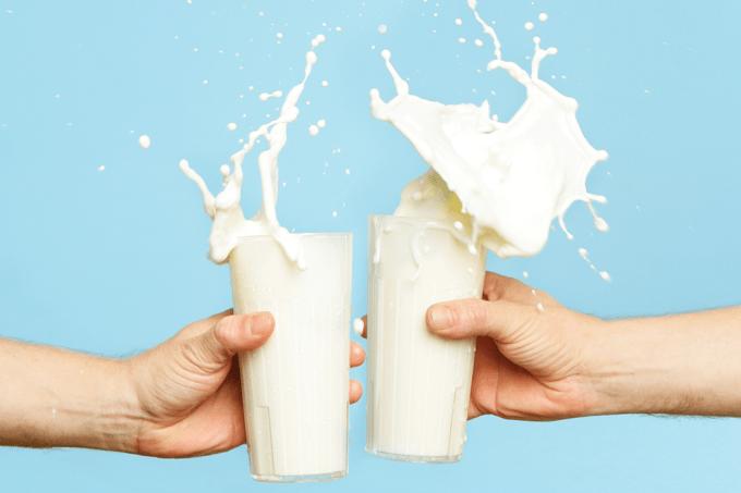O homem é o único mamífero que bebe leite depois de adulto?