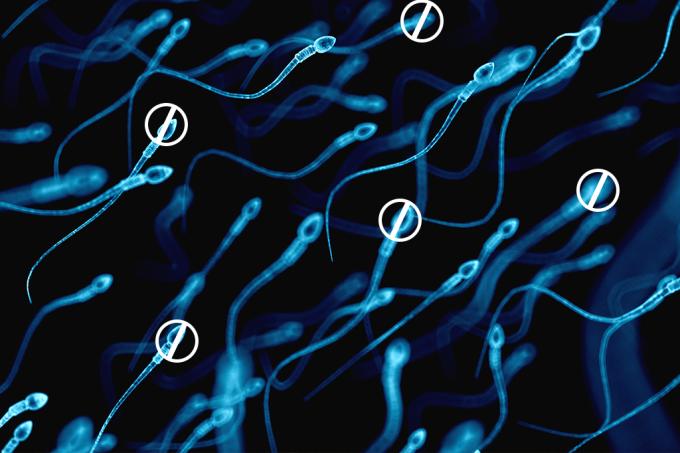 PARCEIRO  Fertilidade masculina caiu pela metade em 40 anos