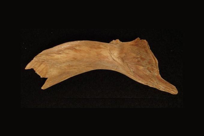 Vikings comercializavam bacalhau há pelo menos 1000 anos