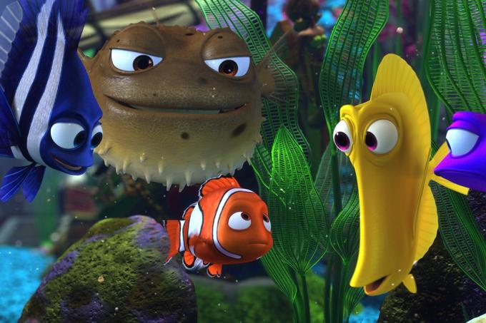 Alguns peixinhos de aquário são mais covardes que outros