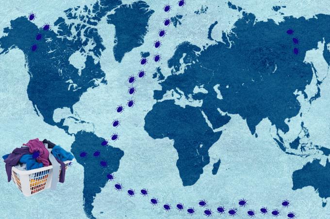 Roupa suja de turistas causou infestação mundial de percevejos chupadores de sangue