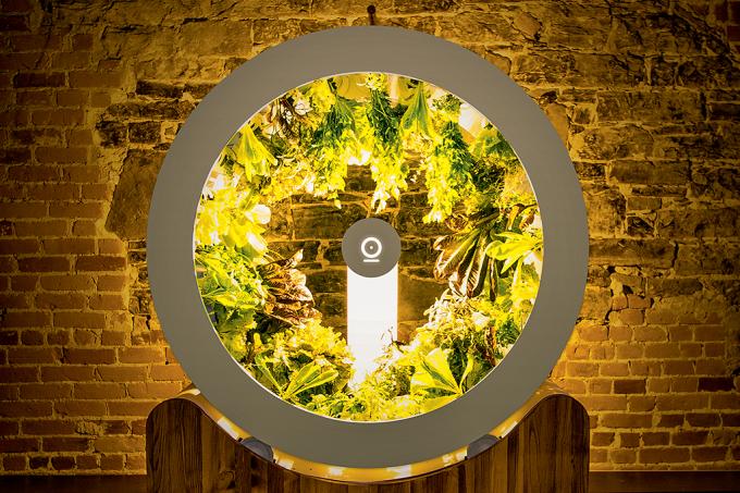 Uma horta orgânica (e automática) dentro de casa