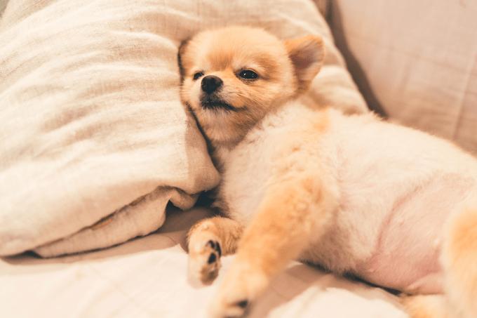 Cachorros dormem mal quando passam por uma experiência ruim durante o dia