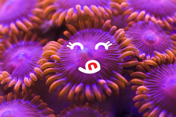Corais se alimentam de plástico porque o gosto é bom