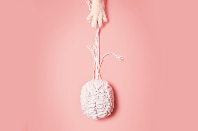 Parasita do gato afeta cérebro humano