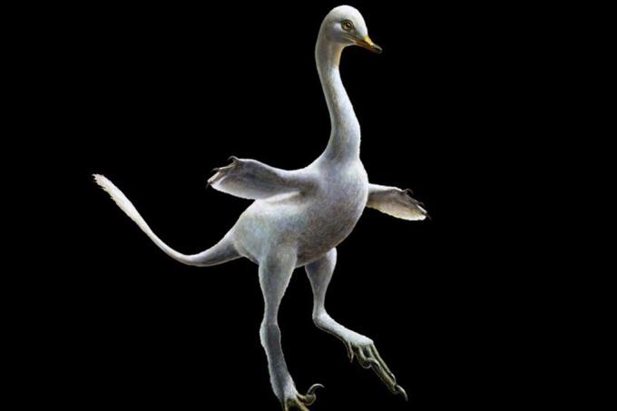 Meio cisne, meio velociraptor- nova espécie de dinossauro aquático intriga cientistas
