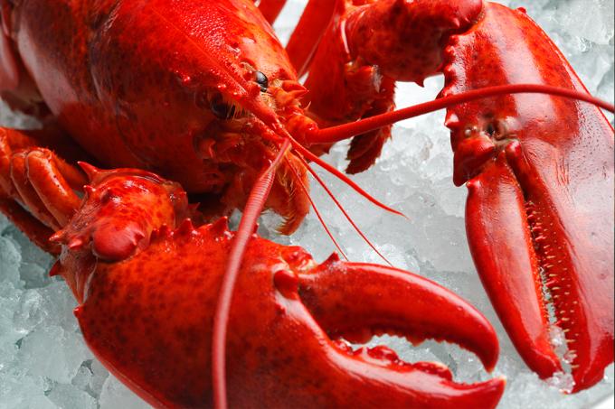 Suíça decide que lagostas sentem dor