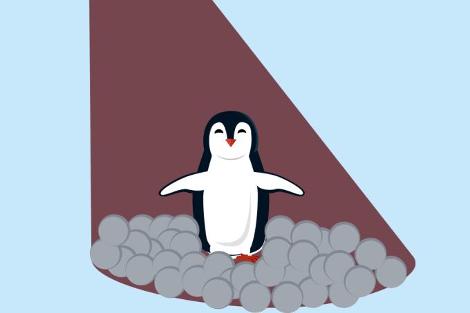 A prostituição entre os pinguins