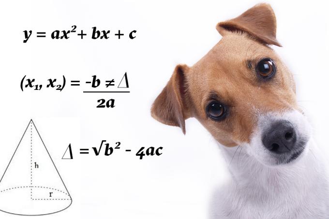 Alguns animais são melhores em matemática que você