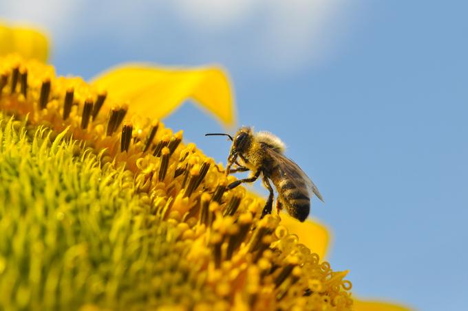 Como criar abelhas em casa